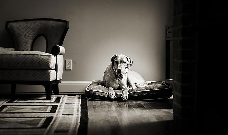 dashing hound