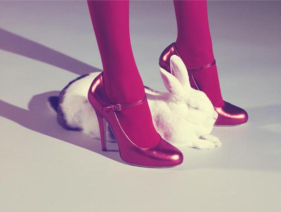 Serval_bunny