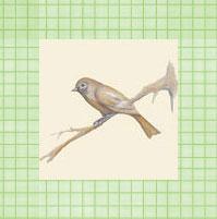 TEA_BIRD_pistachio