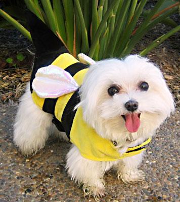 Plumble-Bee-2