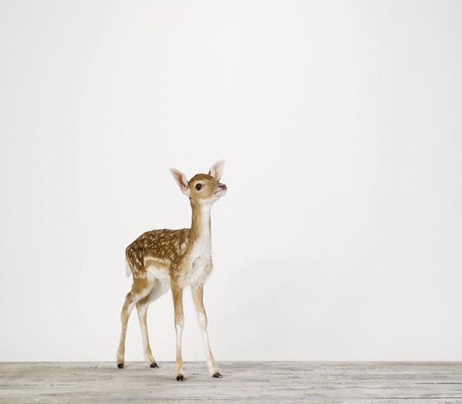 Sharon_deer