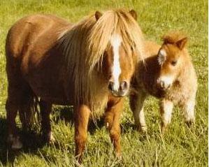 Horsefs