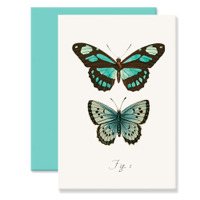 Butterfly_aqua_4bar_web_2